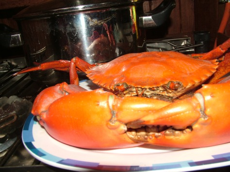 Cooked Mudcrab